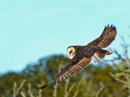 Bionerds Launches Grass Owl Project