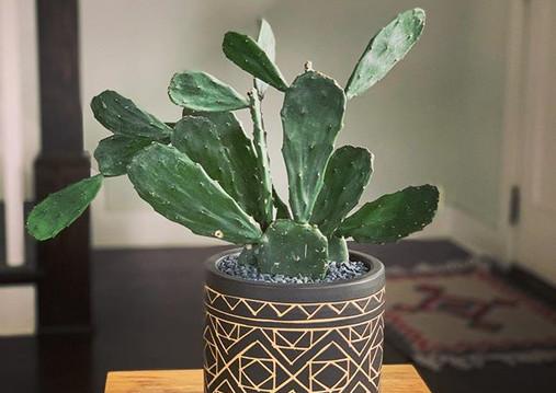Cacti 🌵 by Foiled & Fern  #nashvilleloc