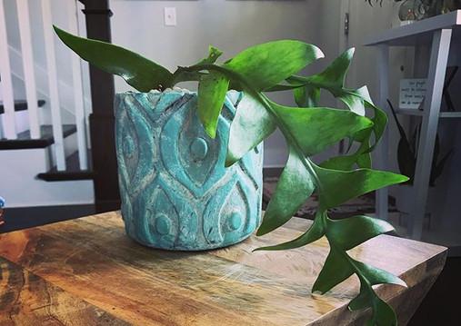 Fern Leaf Cactus 🌿🌵 #foiledandfern