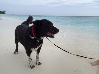 Donny at the beach dog rescue