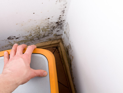 Why you need to have a moisture and mould inspection done in your home and what does it involve