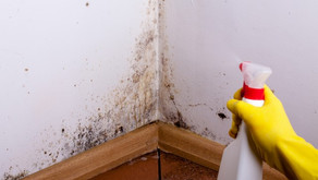 Mould in Your Home: how bad is it and what you can do about it.
