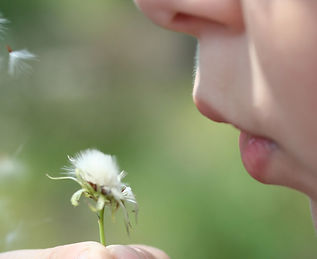 blowing-dandelions-1387187.jpg