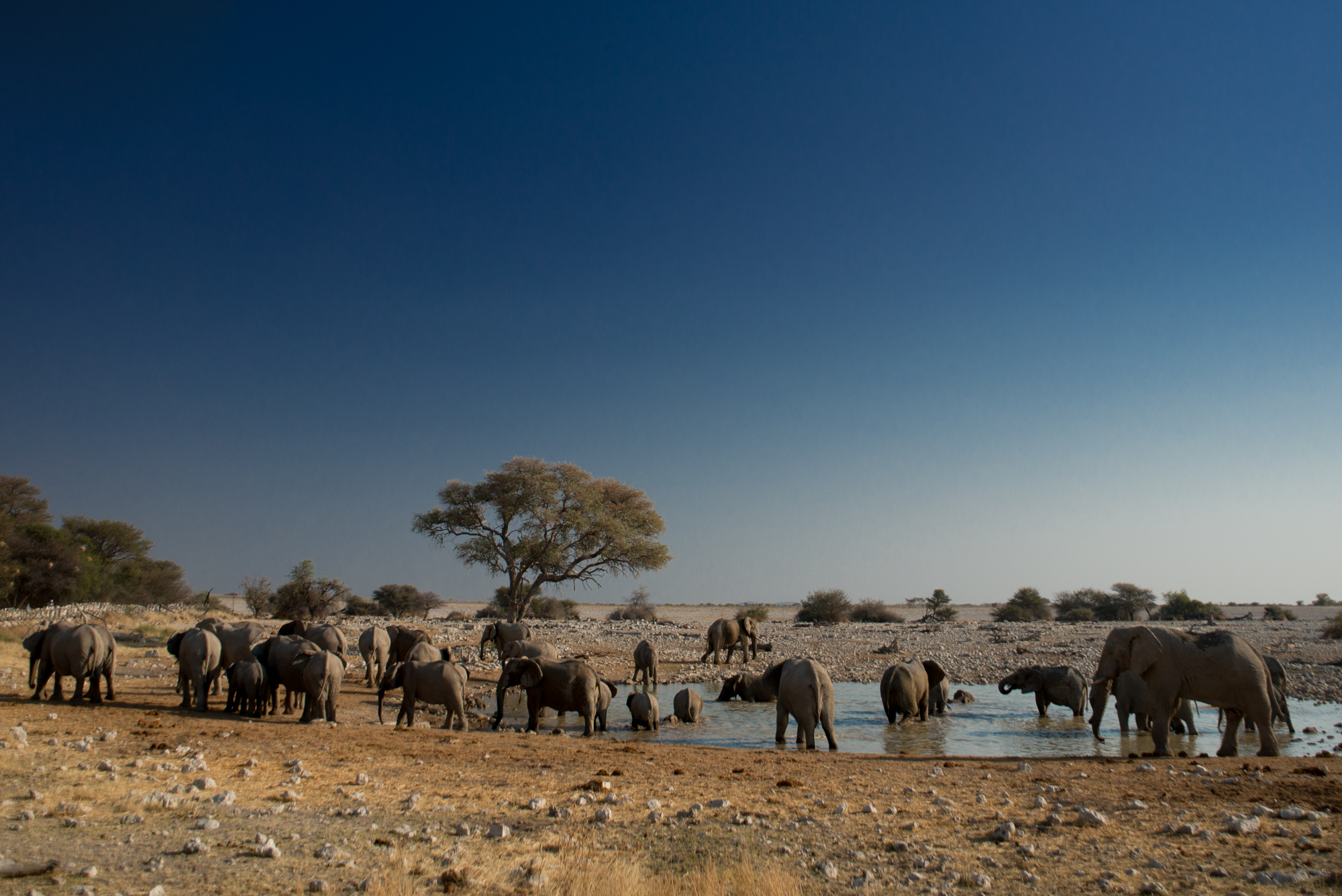 Elefants around the watering hole