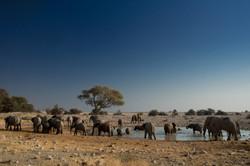 Elefants around the watering hole