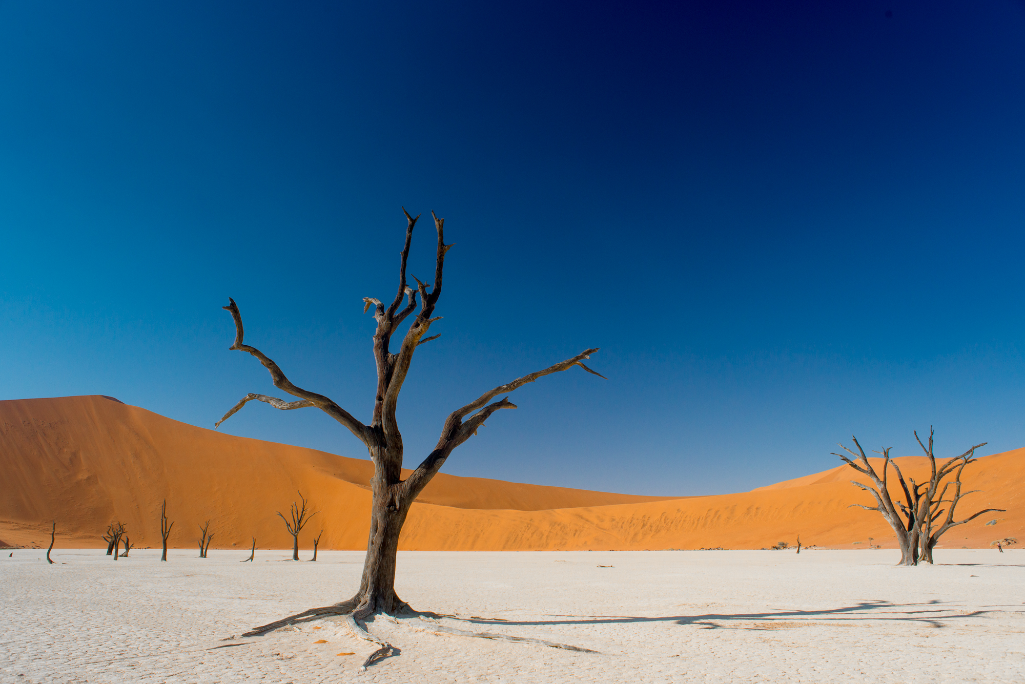 Deadvlei Trees