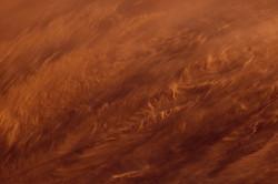 Sand Storm