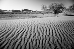 Ripples, Dune and Ergs