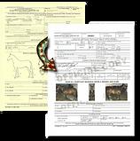 Coggins & vet certificate requi