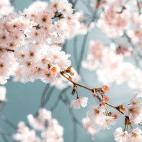 white-flowers-in-bloom-2101187.jpg