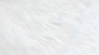 White rabbit cropped.png