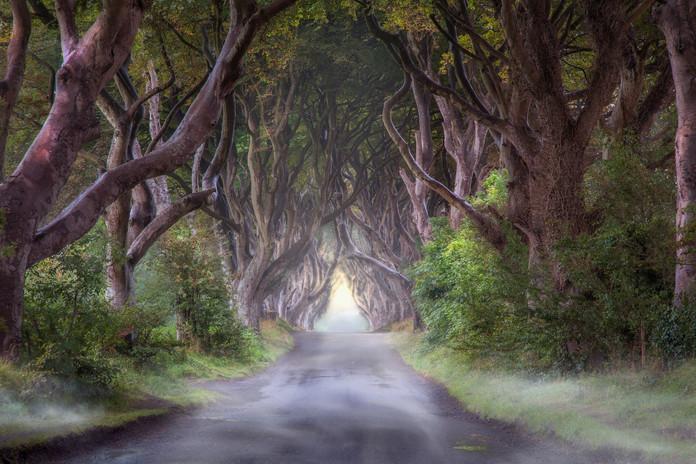 The Dark Hedges, Ireland