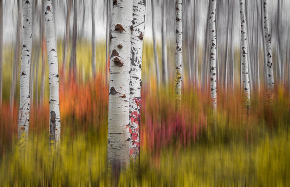 Grounded abstract, Leavenworth Washington 36x56