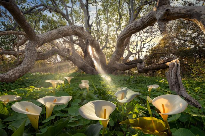 Secret Garden, Southern California