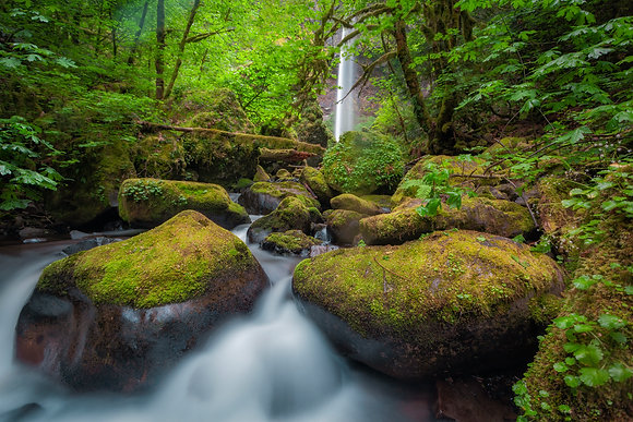 The Fairy's gardnen, Columbia river gorge
