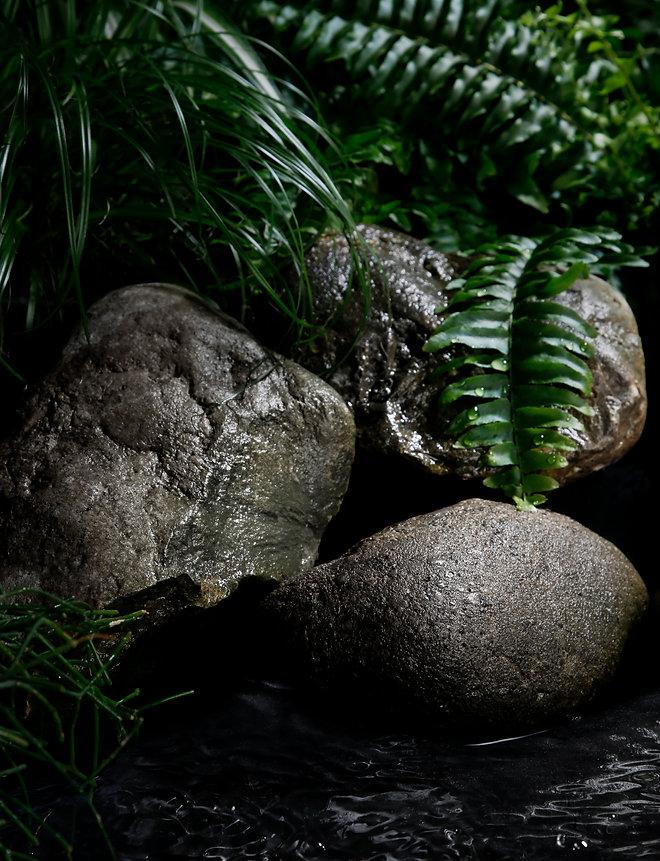 jungle_2.jpg