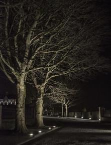 Trees at night. Grand Parade