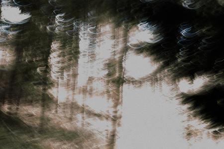 Movement and blur. Dowdeswell Wood