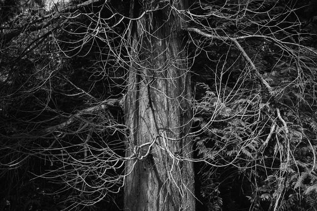 Fris Tree Trunk