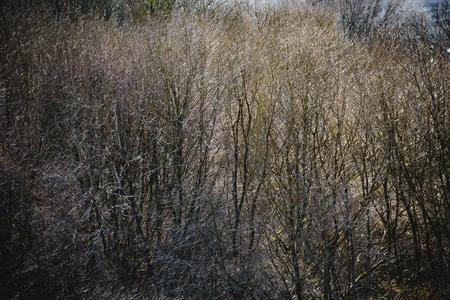 Woodland Trees. Cleeve Common