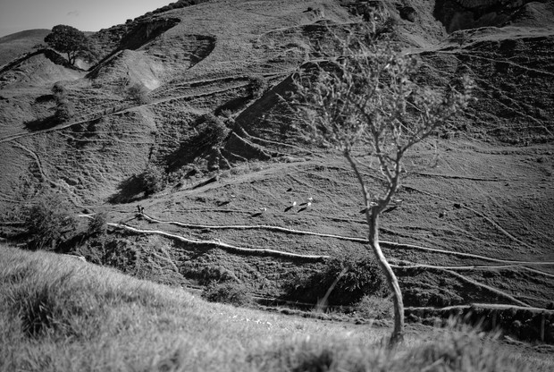 Quarry Hillside and Footpaths
