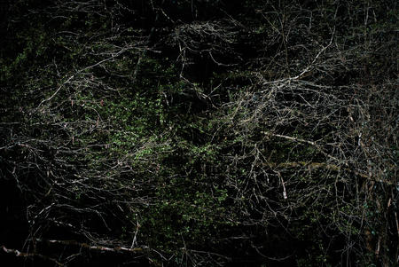 Woods edge. Tangled branches