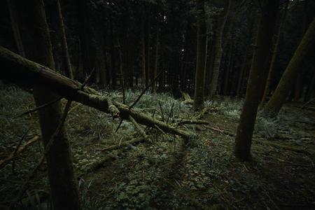 Fallen conifer tree trunk in dark woods. Dowdeswell wood