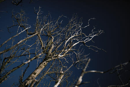 Weathered Tree - Cleeve Common