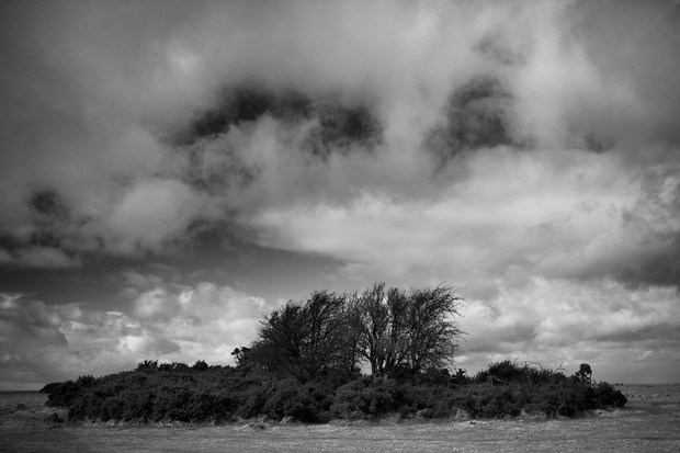 Gorse Island - Cleeve Common
