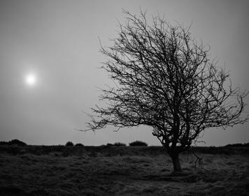 Trees. Cleeve Common