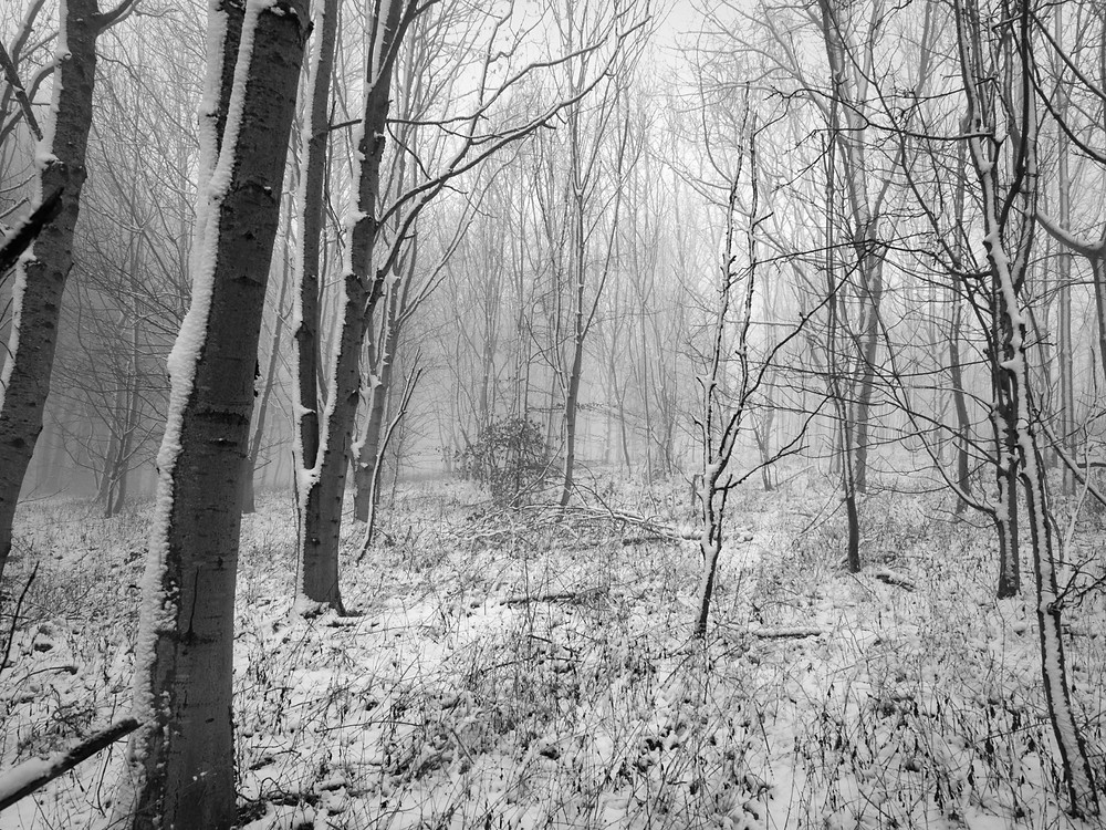 Black and white nature photograph of trees and snow in the Cotswolds