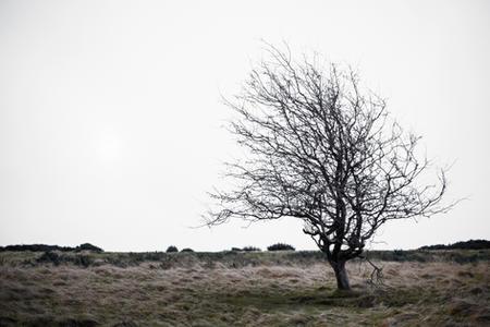 Hawthorn Tree, Cleeve Common