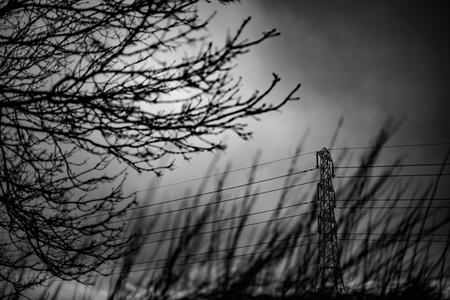 Branches, dark sky and Pylon. Cleeve Common