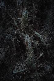 Forest tree vine