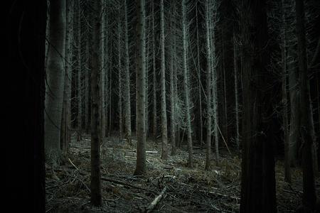 Dense dark forest trees