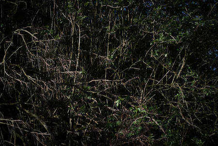 Abstracr. Plants and vegetation and woodland edge