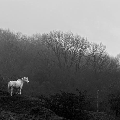Nottingham Hill, White Pony