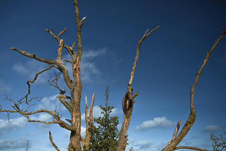 Cleeve Common Weathered Tree