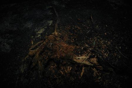Tree remains. Dark forest floor