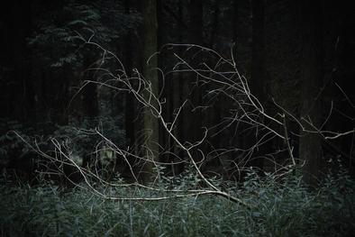 Fallen branch. Dowdeswell Wood