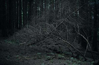 Fallen conifer in dense dark woodland