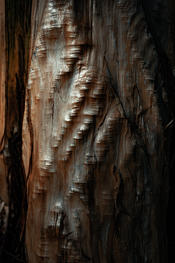 Stripped confier tree trunk
