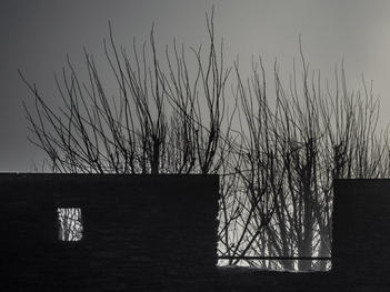 Early morning fog. Derry City Wall