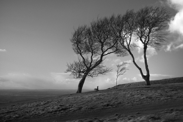 The Three Sisters - Cleeve Common