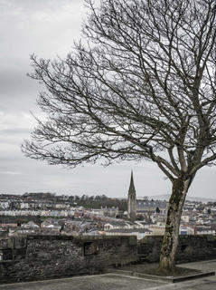 Tree. Grand Parade. Derry City Wall.