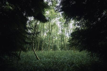Dense wpodland opening. Dowdeswell wood