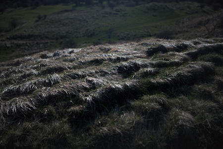 Grass. Cleeve Hill / Common