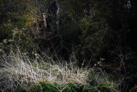 Trees and vegetation at woodland edge