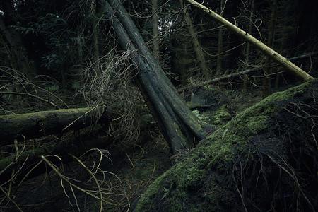 Fallen Trees. Dowdeswell Wood