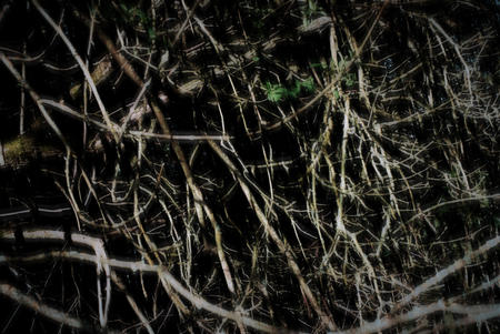 Mass of tangled branches and plants